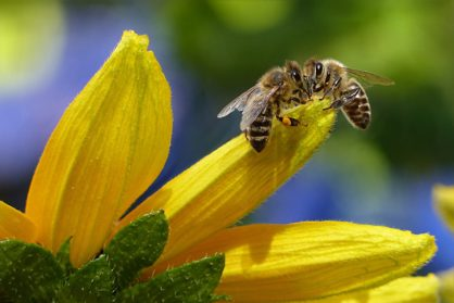 🐝Rettet die Bienen‼️🐝